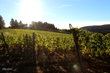 Kramer Vineyard