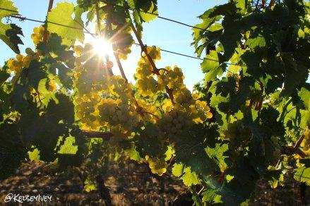 Kramer Vineyard Chardonnay