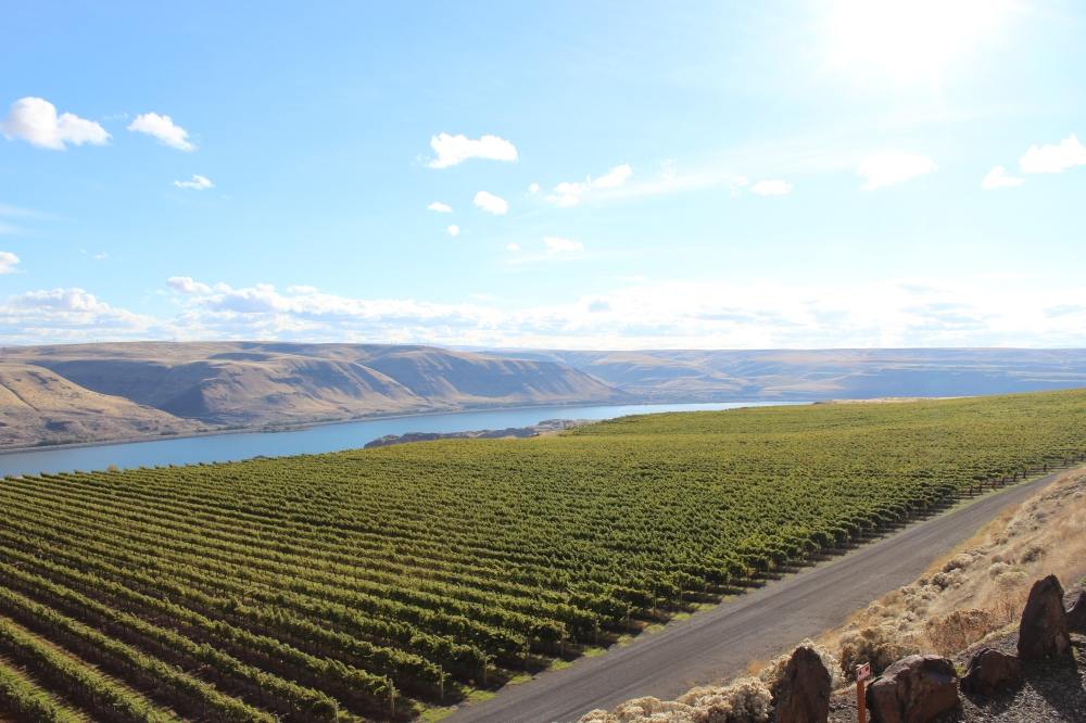 Maryhill Winery Vineyards