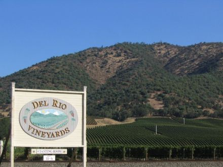 Del Rio Vineyard